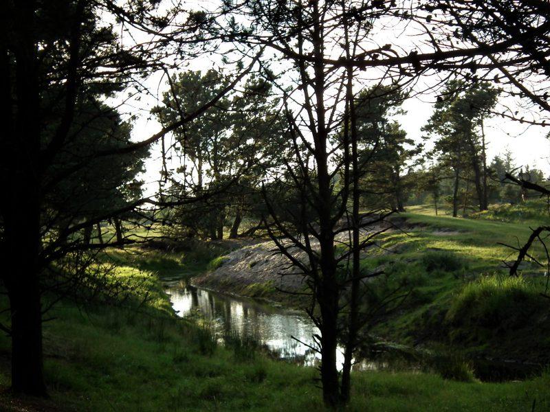 Røgegård